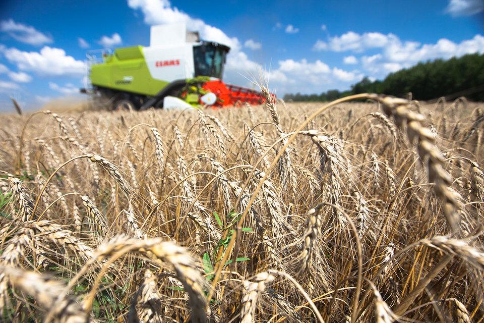 Превосходная погода в России обещала высокий урожай и, как следствие, высокий экспорт – 30 млн т пшеницы