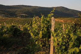 Компания, владельцем которой считается Андрей Костин, скупает виноградники в Крыму