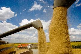 Чтобы купить российское зерно, турецким мукомолам нужно где-то купить втрое больше чьего-нибудь еще зерна