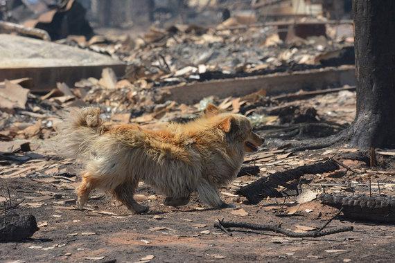 В условиях «Особого противопожарного режима» запрещается сжигание сухой травы и мусора, проведение огневых и других пожароопасных работ, разведение костров на территории населенных пунктов и в лесных массивах. Кроме того, вводится ограничение на доступ населения в леса, говорится в сообщении МЧС