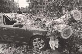 МЧС накануне урагана в оперативном прогнозе сообщило, что «опасных природных явлений не прогнозируется», но предупредило о «неблагоприятных природных явлениях»