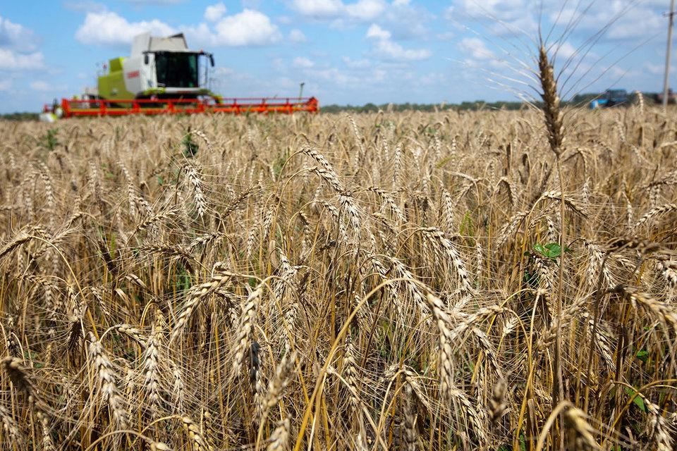 Зерна все равно много