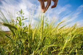 Над экспортерами зерна нависла новая угроза