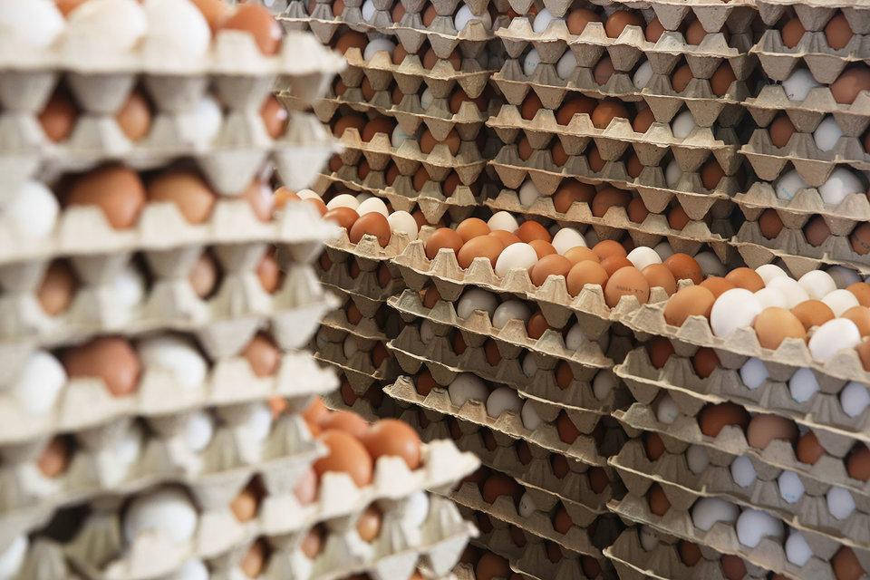 Завод поставлял комбикорм крупнейшей в Росси птицефабрике