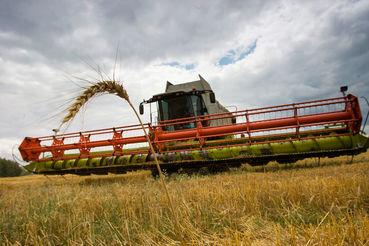 Запасов много, но в экспортно-ориентированных регионах пригодного для экспорта зерна осталось немного