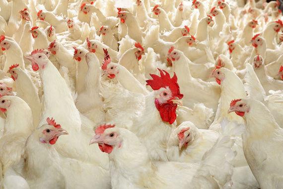 Семья основателей агрохолдинга «Черкизово» выкупит 21% группы у Prosperity Capital Management