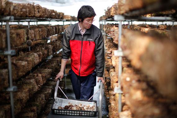 Mitsui& Co. может принять участие в крупном тепличном проекте Подмосковья