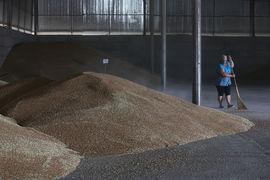 На элеваторах Сибири скопилось много зерна