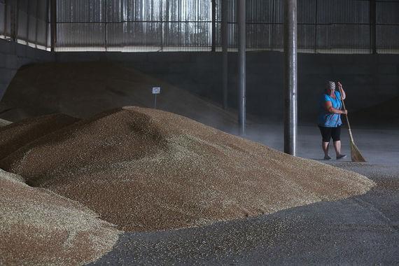 Минсельхоз хочет продать часть зерна из госфонда на экспорт