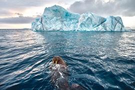 «Роснефть» – царица морей