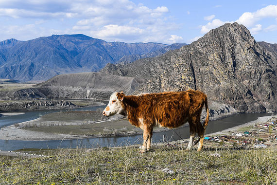 Почти на две недели туристы едут в Алтайский край. По подсчетам АТОР, это самый дорогие туры рейтинга, они обойдутся примерно в 54 000 руб. (без дороги)