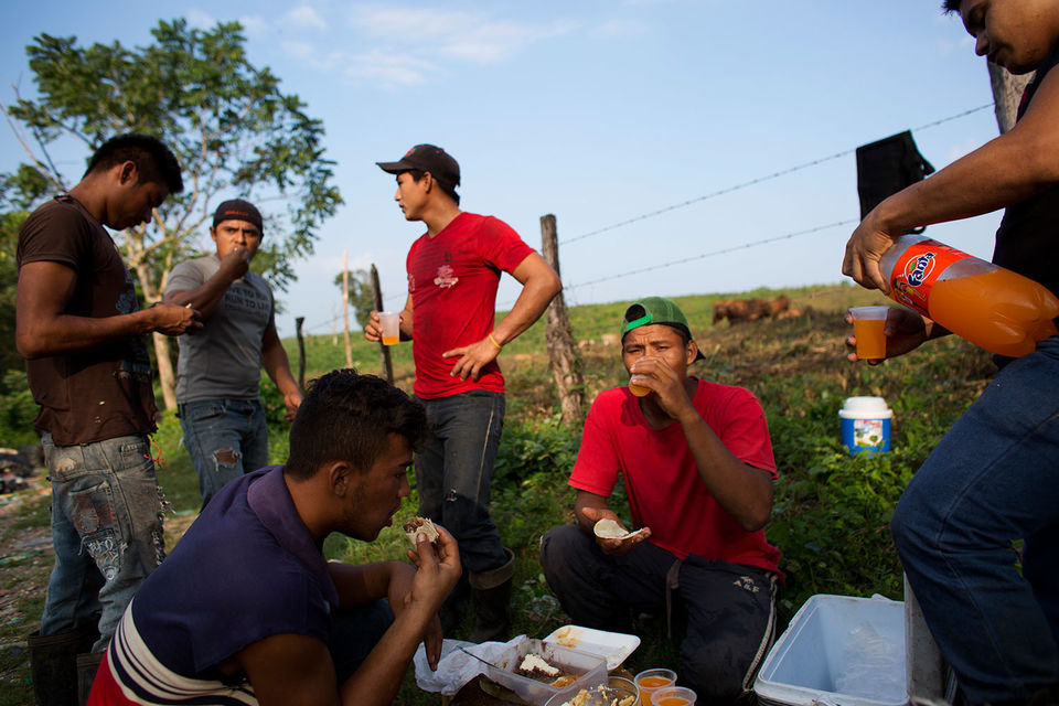 Министерство труда США выдало более 160 000 виз для временной работы в сельскохозяйственном секторе – в основном, мексиканцам – за первые девять месяцев 2017 финансового года