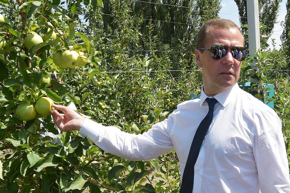 ФБК в недавнем расследовании называл Андрея Медведева двоюродным братом премьер-министра Дмитрия Медведева (на фото)