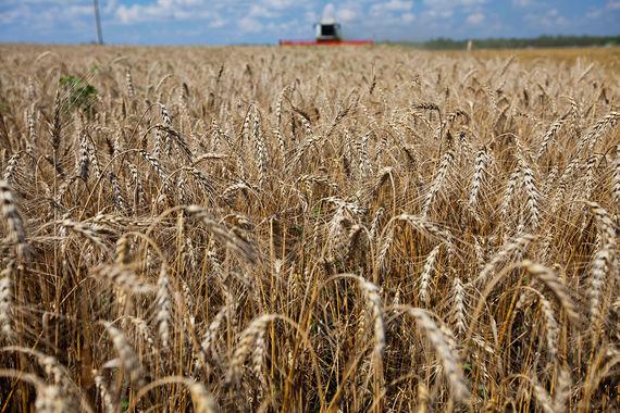 normal 5e0 Ткачев: Минсельхоз готовится к зерновым интервенциям