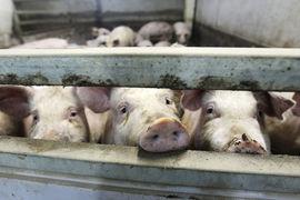 Люди стали меньше экономить на мясных продуктах