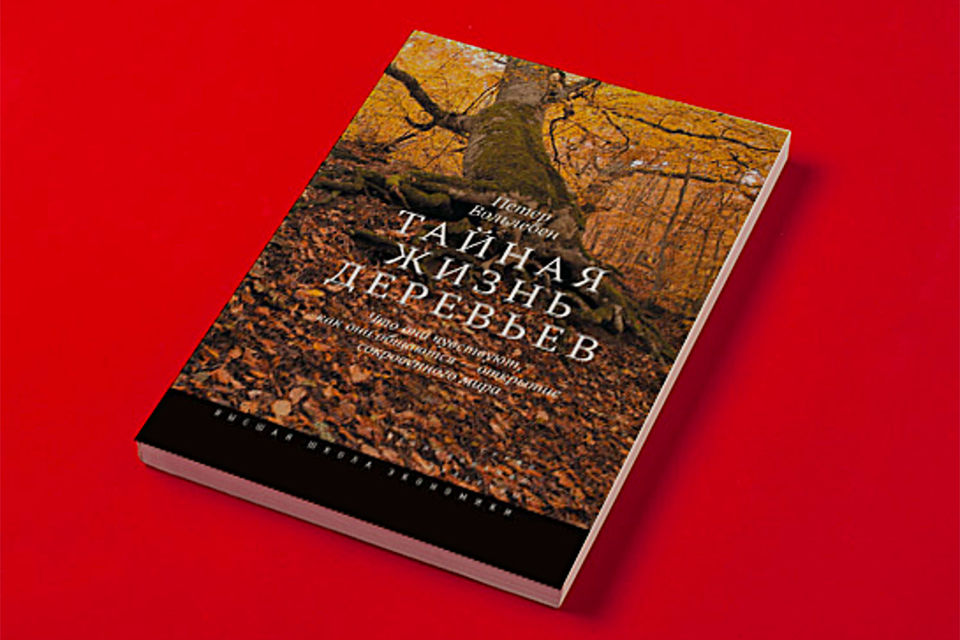 Обложка книги Петера Вольлебена «Тайная жизнь деревьев»