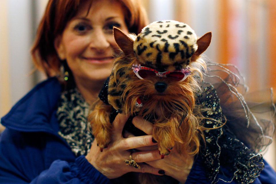 Самой «кошачьей» страной в мире стала Румыния, а по числу семей с собаками она уступает лишь Чили и Бразилии