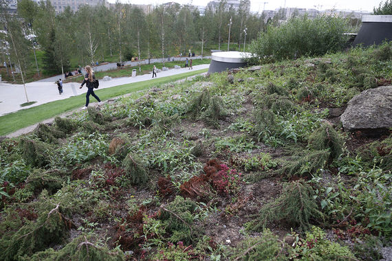 Уничтожено 30% зеленого покрова