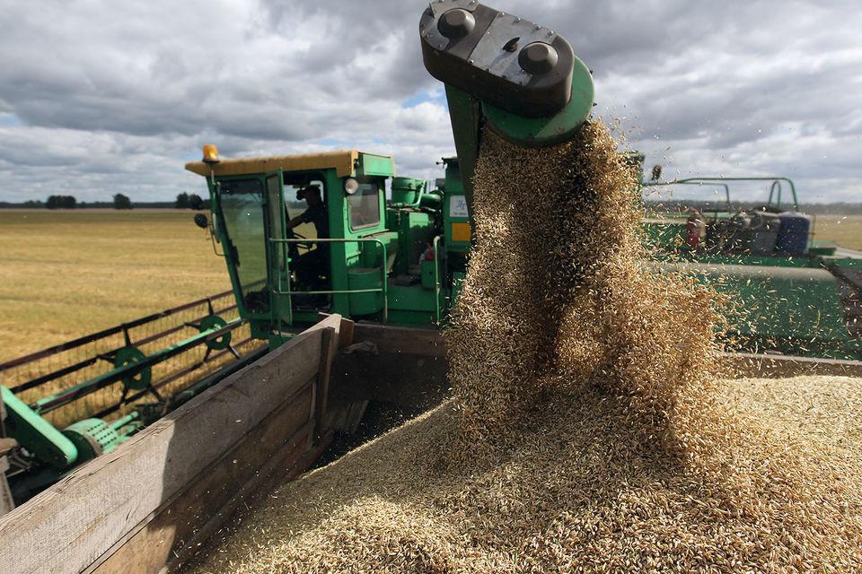Россия в этом году соберет рекордный урожай зерна, с уверенностью заявил министр сельского хозяйства Александр Ткачев