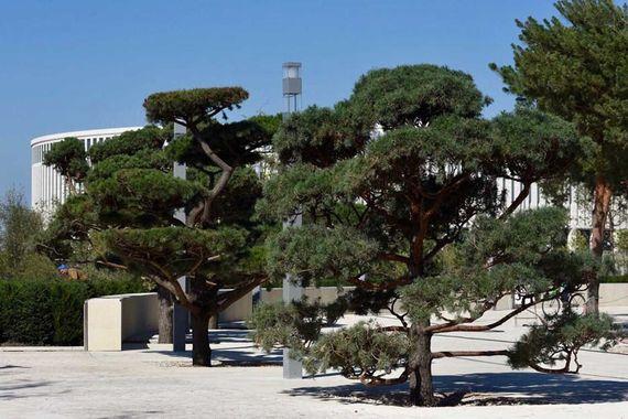 В планах дополнительно посадить еще 150-200 деревьев