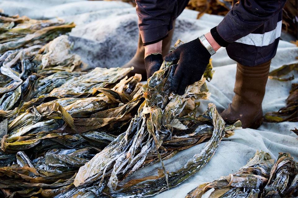 Упаковка сухих водорослей для спа-процедур стоит почти 3000 руб.
