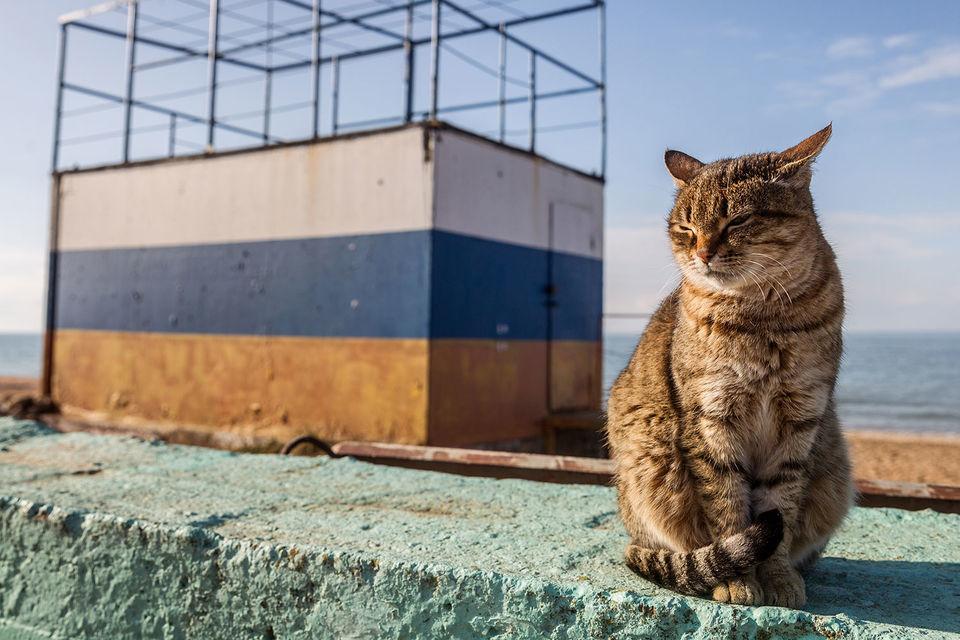 Некоторым «жирным котам» ЦБ прописал диету
