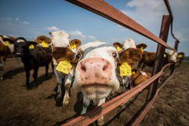Прежде всего на проблемы с ЭВС сельхозпродукции указывали переработчики молока