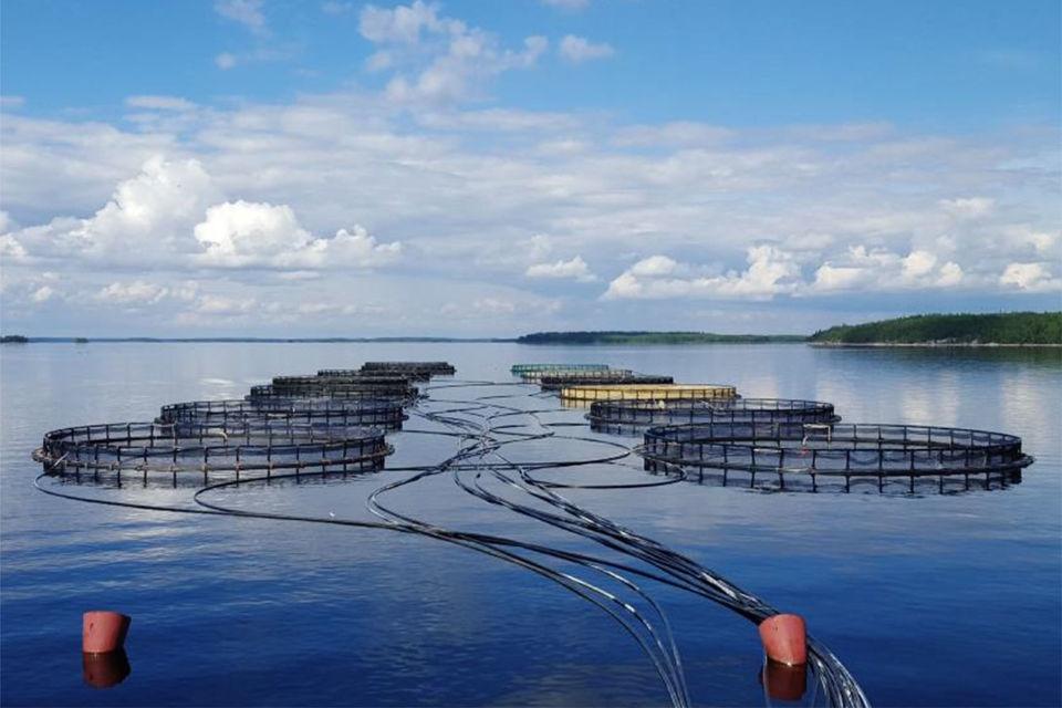 «Русская аквакультура» сообщила о намерении провести SPO 9 ноября