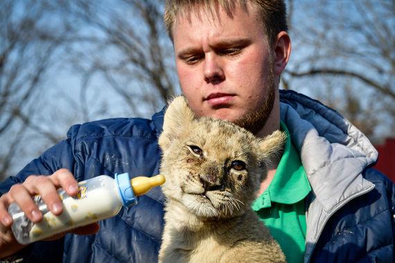 Некоторые россияне готовы лечить на заемные средства экзотических животных. Как правило, речь идет о змеях и игуанах, реже – об обезьянах и черепахах