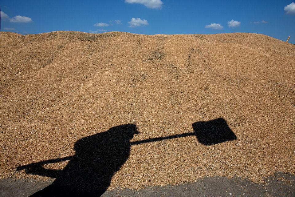 Египет осудил российское зерно