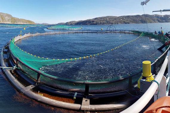 Компания брата губернатора Подмосковья инвестирует в переработку рыбы