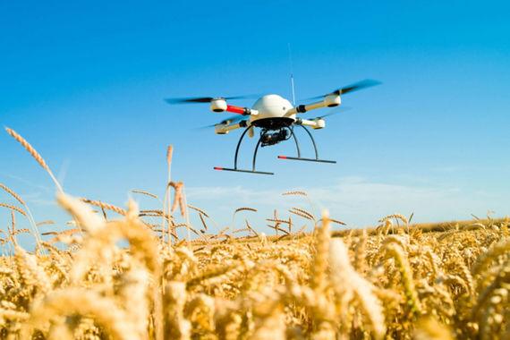 «Сколково» проинвестирует стартапы для сельского хозяйства