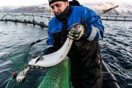 Когда «Русская аквакультура» проводила IPO в 2010 г., бизнес по  выращиванию рыбы только начинался, основной доход давали дистрибуция и  продажи готовой продукции
