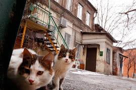 73% россиян считают, что некоторые регионы больше Москвы нуждаются в реновации жилищного фонда