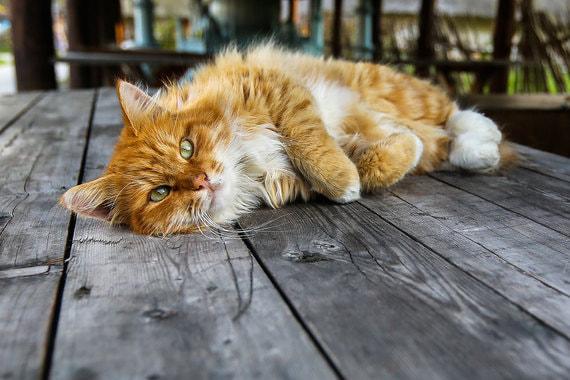 normal 187t Все кошки «Ведомостей»