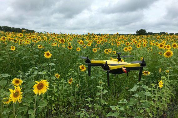Российская венчурная компания вложилась в сельскохозяйственные дроны
