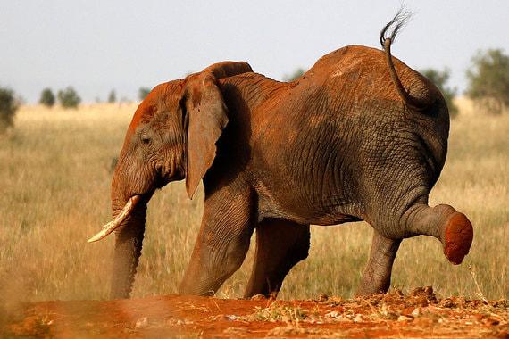 Компания Qiwi о действиях Роскомнадзора: «Деятельность надзорного органа сейчас напоминает слона в посудной лавке: от этих блокировок страдают все, кроме Telegram»