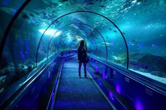 Самым популярным парком у туристов, приезжающих на Лазурный берег, оказался Marineland в Антибе. Это следует из отчета Регионального комитета по туризму. В 2014 г. Marineland посетило 1,2 млн человек