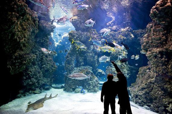 Океанографический музей Монако привлек 665 000 гостей