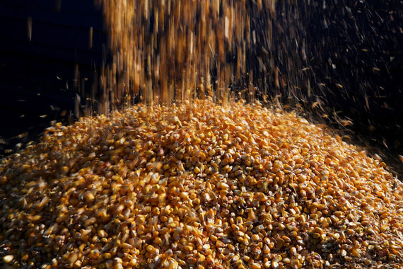 Крупнейший экспортер зерна нашел партнера для создания терминала в Новороссийске