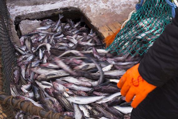 Рыбопромышленная компания Глеба Франка готовится сменить гендиректора
