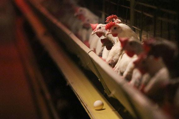 За лечение животных расплачиваться придется переработчикам животной продукции