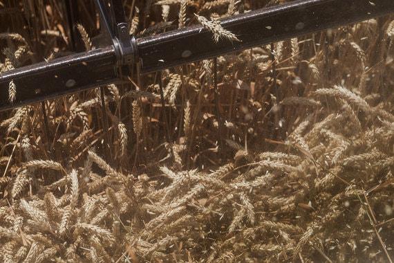 Минсельхоз думает, как сдержать рост цен на зерно