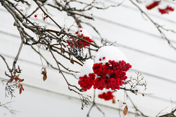 normal 19vr В Москве прошел первый этой зимой «настоящий снегопад»