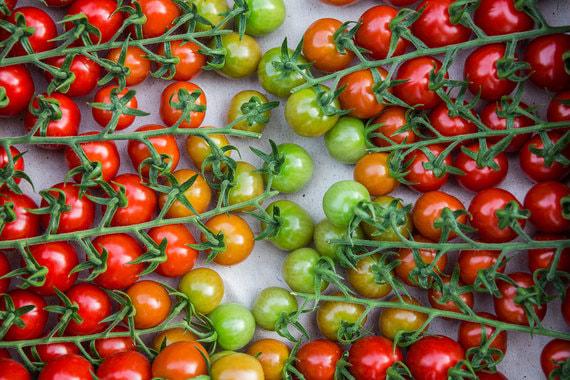 normal wxe Как выращивают помидоры зимой в России