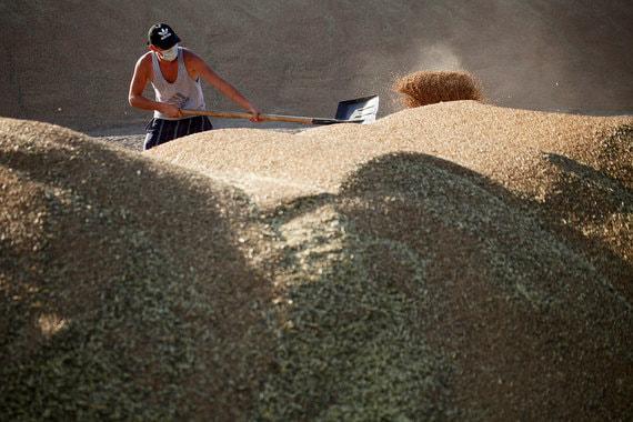 normal 1r9w Россию вновь ждет богатый урожай зерна