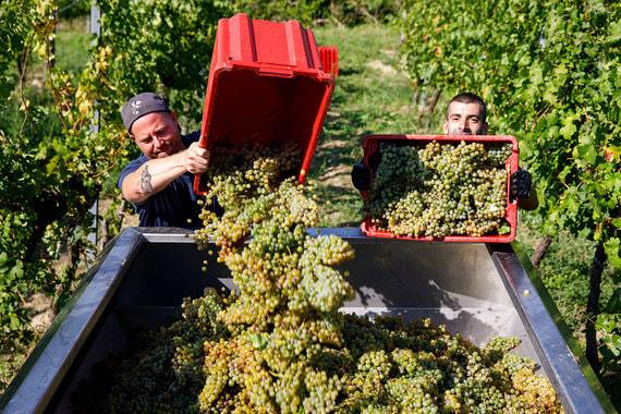 normal 1qks Семья экс министра сельского хозяйства защитила винодельню