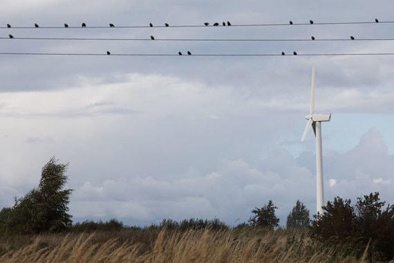 normal 1sao Владимир Путин вступился за птиц и червей, которые, по его мнению, страдают от возобновляемой энергетики