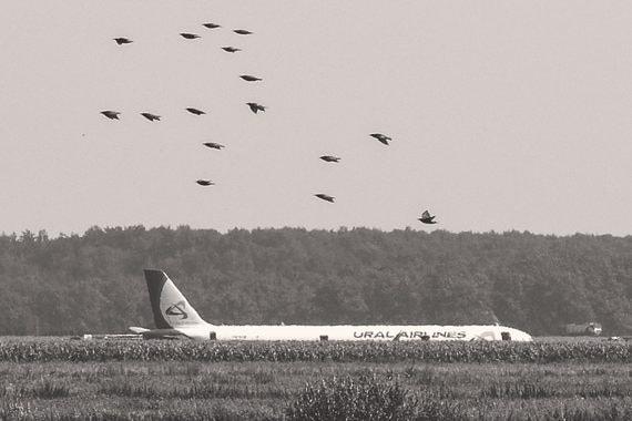 Мусор и многоэтажки против самолетов