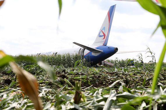 Авиакомпании давно жалуются на стаи птиц в аэропортах